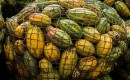 Learn about cacao plant processing