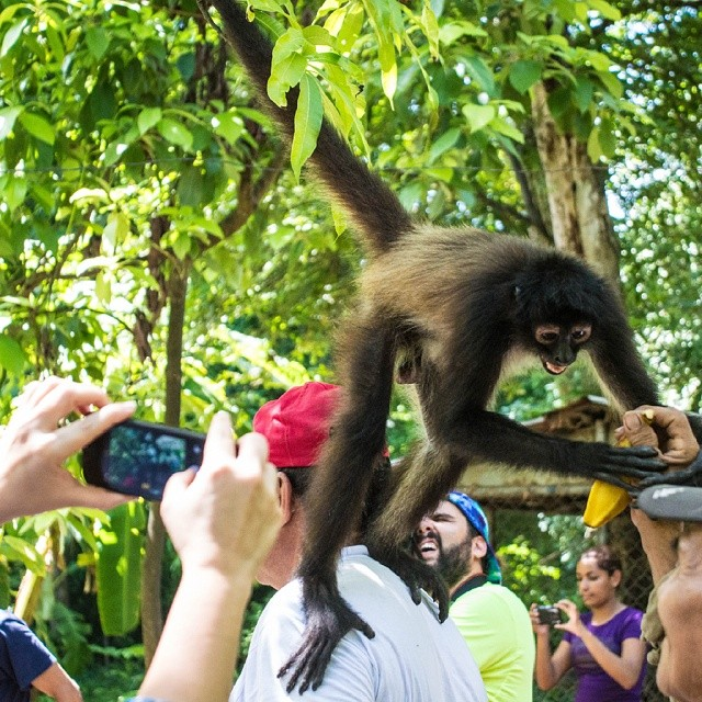 Everybody likes the monkey tour.  You can't stay without visiting our sanctuary.  Make your reservation now!  Phone: (503) 2675-1131  #puertobarillas #elsalvador animals #animal #sanctuary #TagsForLikes #monkey #green #trees #nature #photooftheday #cute  #instagood #animales #cute #love #nature #animallovers #free