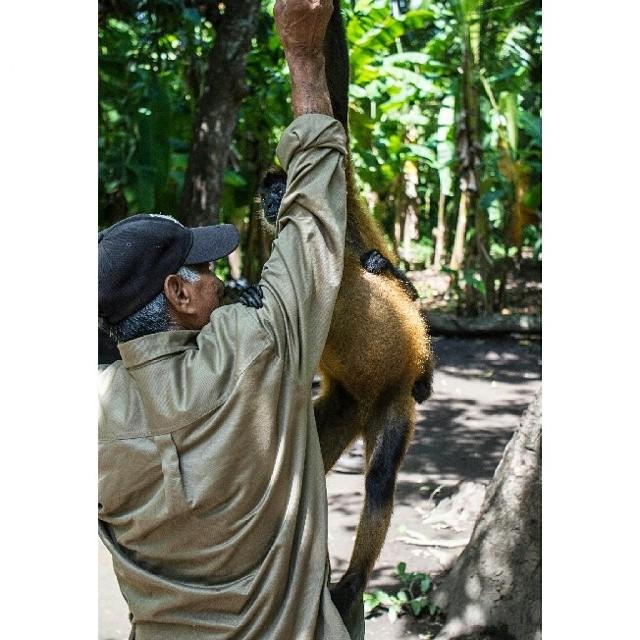 El tiene mucha historia que contarte. El ha estado desde que los monos llegaron a Puerto Barillas... ¿Qué esperas para visitarnos? No te pierdas de esta increíble aventura.