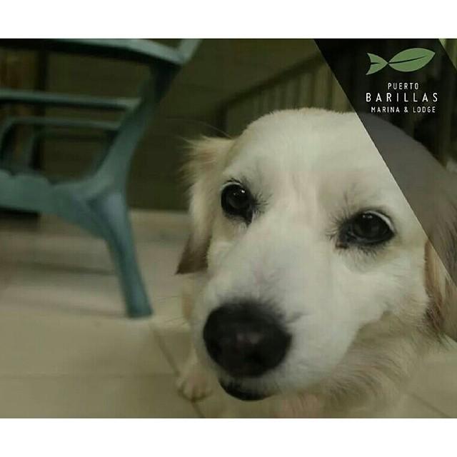 Pet friendly Lodge & Marina (reglas aplican) ¿Cuantos mas hoteles pet friendly hay en El Salvador? ¡Ven a disfrutar con TODA tu familia!