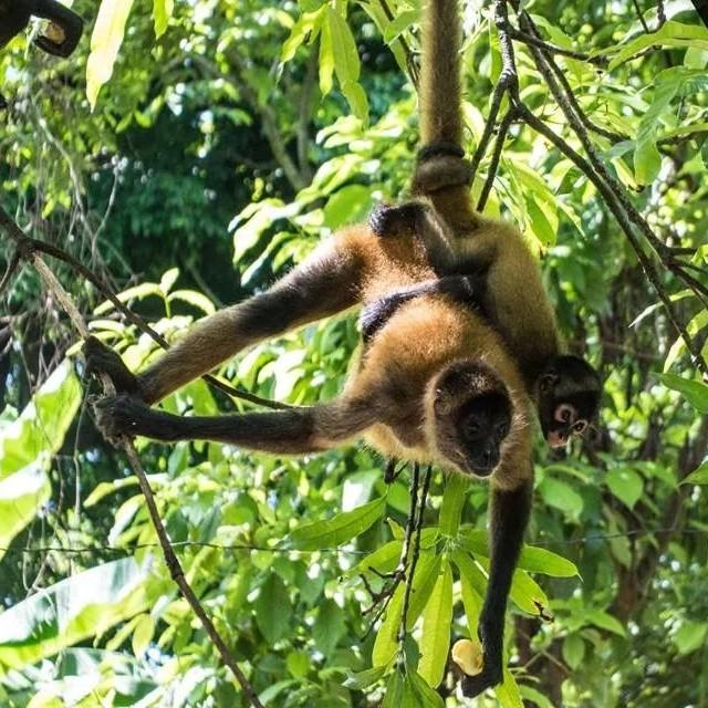 Tenemos los paquetes del dia. ¡solo para ti! Puedes incluir la visita al santuario de monos. Te encantará ... Puedes disfrutar de Maria y su bebe de 18 meses... te esperamos.