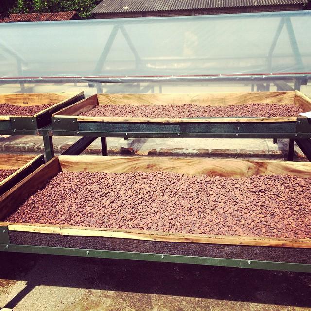 Cocoa...Cocoa ...and more Cocoa . Drying Cocoa ( fermentación). Take a Puerto Barillas Cocoa tour!  #visitelsalvador #cocoa #chocolate #travel #tours #instagood #responsibletourism #bestoftheday