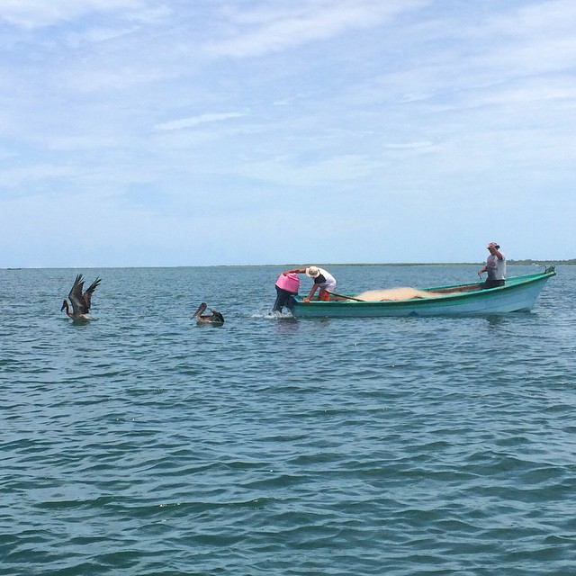 Bahia de Jiquilisco offers spectacular views to Those fishing lovers who enjoy its diverse fauna.  Stay @puertobarillas_elsalvador  #fishing #spot #hub #sunny #fauna #pelicans #picoftheday #visitelsalvador #travel #tourism #funtime #funday