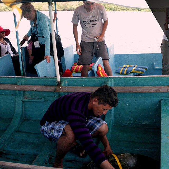 Rodeo Capture Tour.  Step 6- sorry? We got you baby... We are about to learn about the Prieta ( BlackBerry turtle) .  This is a catch and release Conservation program as ICAPO mesures the turtles , monitores the behaviour and saves their lifes #ilovethebay #iloveturtles #visitelsalvador #tours #travel #learn. #live