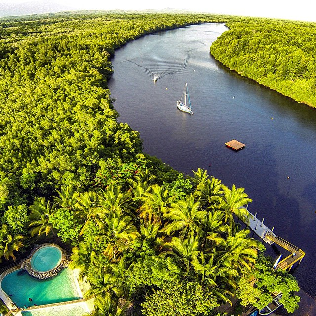 Being Green is so Cool!  #nature #elsalvador @puertobarillas #travel #instagood #kayak #adventure #tours #tourism #mangroves #instagood #tags4likes