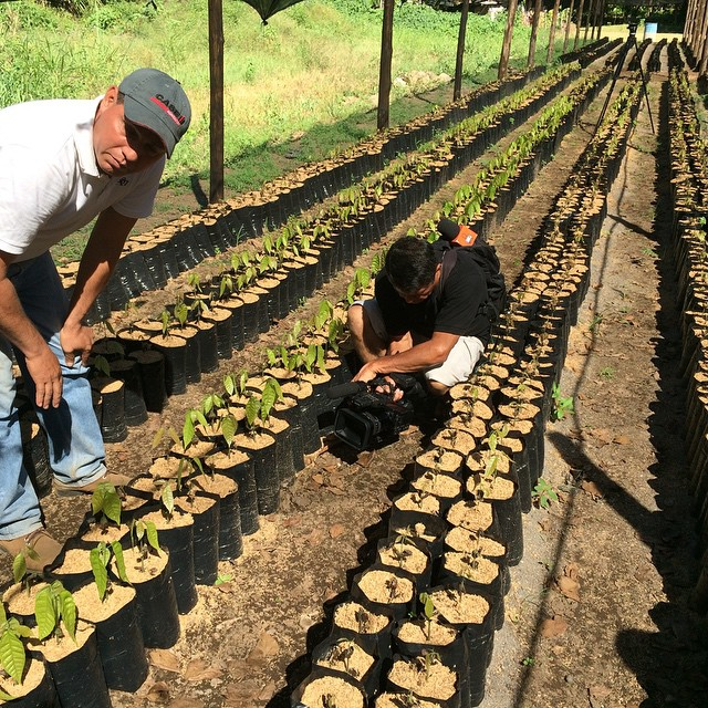 Like chocolate? Take a Cocoa plantation tour in Central America's Largest Cocoa plantation : from the seed or clon .***************#chocolate #cocoa #seed #plants #nature #food #elsalvador #agritourism