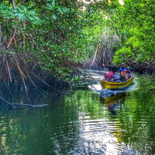 Entre los manglares de ls Bahia de Jiquilisco ***** cruising through mangroves, Bahia de Jiquilisco #nature #sightseeing #whataday #Saturday #vacation. #elsalvador