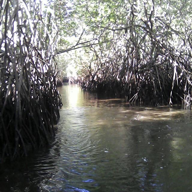 Mangrove Canals at Bahia de Jiquilisco, tours @puertobarillas #boat #tours #mangrove #canals #elsalvador