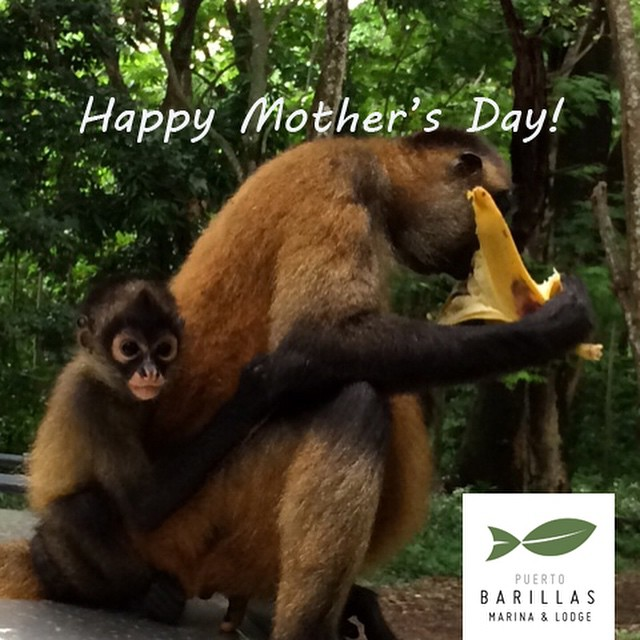 Happy Mother's Day! ..from our monkey sanctuary #maria #goodmother #special #leader